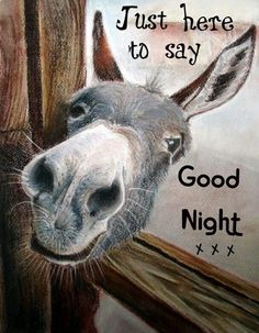 new Ideas quotes good morning love night Cute Good Night, Good Night Sweet Dreams, Good Morning Love, Good Night Image, Good Night Quotes, Good Morning Good Night, Good Night Greetings, Good Night Messages, Good Night Wishes