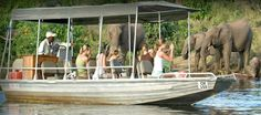 Find out what you need to know & we'll take care of the rest – Safari Online is your one-stop shop for a Botswana safari. Safari Online, Three Rivers, Wildlife, Elephant, African, Boating, Animals, Animales, Ships