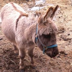 Here is a picture of Little Jack, one of the many donkeys at PrimRose Donkey Sanctuary. Notice the beautiful cross on his back. Every donkey has a cross on their back even if you can't see it. www.primrosedonkeysanctuary.com
