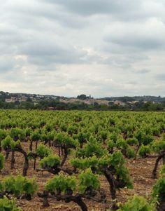 Saint-Georges-d'Orques, la vigne ceinture le village 2 - avril 2014