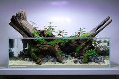 Goldfish Tank, Aquarium Landscape, Modern Floral Design, Aquarium Design, Aquarium Decorations, Aquascaping, Aquariums, Stay Tuned, Water Features