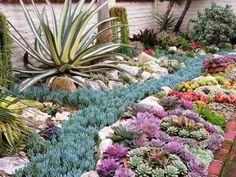 Jardín de suculentas en exteriores - Diseño e Ideas…