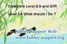 My creatinine level is 3.9 and my GFR level is 14 what should o do ? In fact, for kidney disease patient with creatinine 3.9 and GFR 14 their kidneys have been damaged seriously, so they should pay high attention to it, the timely and proper treatment should be the best choice for them.