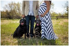 Maternity Photography With Dogs, Couple Maternity Photos, Black Labs In Maternity Photos