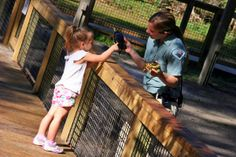 This young guest couldn't resist touching the yellow belly sliders that Park Ranger, Emily had with her.