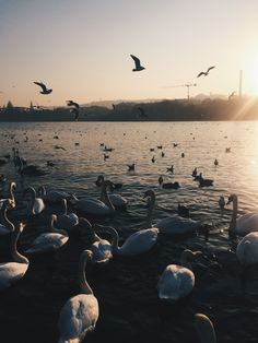 #prague #walk #naplavka #vltava #swan #bird #happy #sun #day #sunset #nature #lover