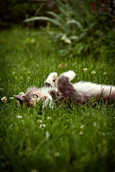 """""""Sleep sweetly in the fields of asphodel, and waken, as of old, to stretch thy languid length, and purr thy soft contentment to the skies."""" --Agnes Repplier"""