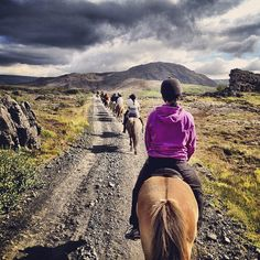 The history of the #Icelandic #Horse can be traced right back to the settlement of the country in the late 9th century.