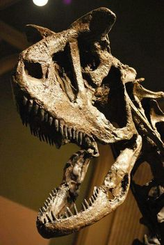 Carnotaurus skull - Dinosaur Discovery Museum, Kenosha, Wisconsin.
