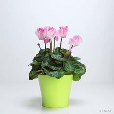 3 Ingrédients qui ressusciteront tes plantes préférées