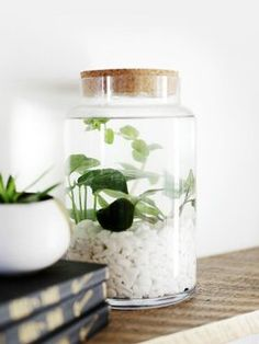 What if I say you can have a garden inside your home and that too a water garden? Well, these Brilliant Indoor Water Garden Ideas speak for themselves. Indoor Water Garden, Indoor Vegetable Gardening, Hydroponic Gardening, Indoor Plants, Container Gardening, Glass Garden, Organic Gardening, Water Gardens, Fairy Gardening