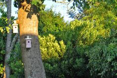 Verano silvestre off line. Summer in the garden. Little Bird houses