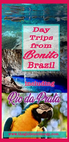 Day trips from Bonito - the eco-tourism capitol of Brazil and a hot spot for eco tourism worldwide. See the colourful fish when you snorkel rio da prata - worldwide renowned ecotourism freshwater snorkelling, visit buraco das araras and see the red macaws, visit beautiful grotto de azur the aqua blue lake in a cave and then there is swimming at estancia mimosa! Plenty of sustainable ideas for your brazil travel bucket list!