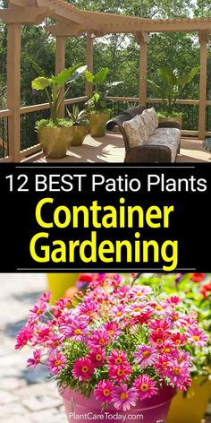 Potted patio plants, deliver the benefits container gardening in a small space. Versatile, attractive and easy care make them excellent patio additions.