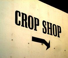 Crop Shop: on a wall in #Norwich