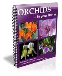 cool Orchids in Your Home