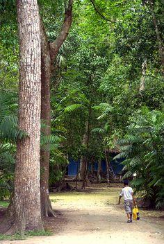 Tikal, Guatemala - Journey Untraveled.
