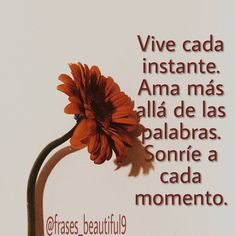 Vive cada instante... Place Cards, Place Card Holders, Frases, Live, Words