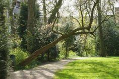 Boom in het park in Wormerveer