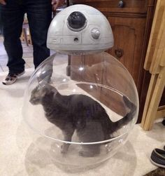 So that's how #BB8 gets around #caturday