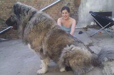 Biggest Dog Ever