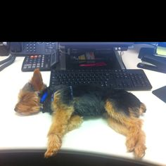 Long day at work, Živko was very tired so he decided to nap on my desk:).