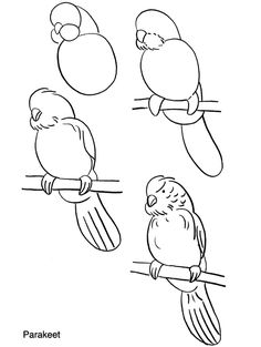 How to draw parakeets.