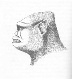 What Changed the Face of Bigfoot?