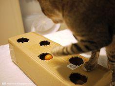 Cardboard games cat