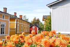 Old Rauma, Finland Cities In Finland, Wooden Architecture, Western Coast, Old Port, Wonderful Places, Beautiful Things, Summer Travel, World Heritage Sites, Dream Vacations