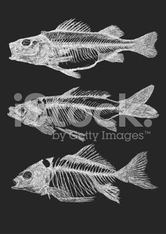 Additional EPS file contains the same image with lines in stroke form, allowing you to convert to a brush of your choosing. Colors are layered and grouped separately. Skeleton Drawings, Fish Skeleton, Skeleton Art, Fish Drawings, Fish Bone Tattoo, Bone Tattoos, Fish Anatomy, Bone Drawing, Fish Fossil