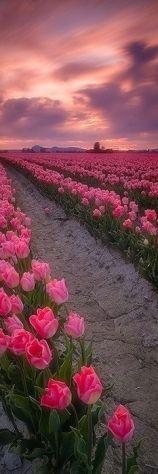 Pink flowers, pink sky