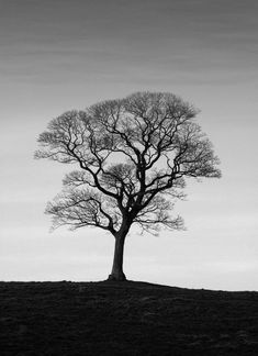 40 naturally beautiful photos of trees psdfan picture tree, picture ideas, Picture Tree, Photo Tree, Picture Ideas, Black And White Tree, White Art, Lone Tree, Tree Photography, Tree Silhouette, Winter Trees