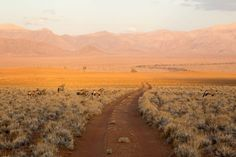 Highlights in Namibia
