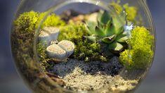 Genel Olarak Teraryumlar kapalı, yarı açık ya da tam açık olabilir. Kapalı teraryumlar bitki ve diğer canlılariçin muhteşembir ortam oluşturur, saydamdış tabakaısı ve ışık geçirgenliği yönüyle …