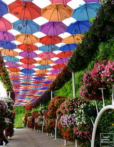 The Flower Garden: 45 Photos Of The Amazing Dubai Miracle Garden Dig Gardens, Amazing Gardens, Beautiful Gardens, Beautiful Roses, Beautiful Places, Million Flowers, Umbrella Decorations, Miracle Garden, Umbrella Art