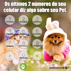 Pet Shop Online, Templates, Pretty Animals, Fluffy Animals, Love My Dog, Dog Cat, Pranks, Laughing, Gatos