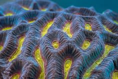 Daniel Stoupin takes underwater photography to a new level. It turns out that some of the most psychedelic landscapes on earth are coral reefs! Underwater Photography, Macro Photography, Wildlife Photography, Aquarium Sump, Hard Coral, Science Photos, Great Barrier Reef, Pictures To Draw, Detailed Image