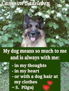 My dog means so much to me... www.facebook.com/cash.von.badeleben