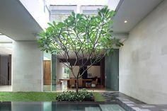 Frangipani tree inside!