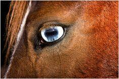 Photo by Esko Männikkö Conceptual Photography, Amsterdam, Museum, Horses, Visual Arts, Animals, Artists, Eye, Summer