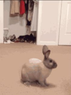 This bunny running up on this other bunny who didn't even know what was happening. | The 33 Most Important Bunny GIFs On The Internet