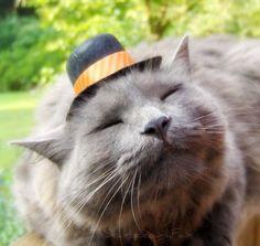 Cats wearing tiny hats make me so happy.