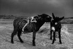photos by Cristina Garcia Rodero Female Photographers, Documentary Photographers, Horse Photography, Street Photography, Moose Art, Photographer Portfolio, Personal Photo, Henri Cartier Bresson, Magnum Photos