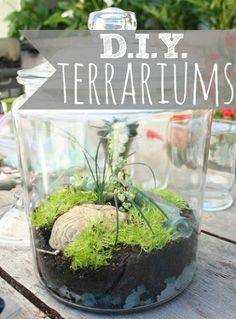Make Your Own Terrariums at Home