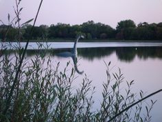 Loch Ness Monster in MN?  Nah, it's just Minne!  Check out http://mplsparksfoundation.org/projects/minne/