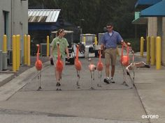 Seaworld flamingo walk.  It would make my day to see this!