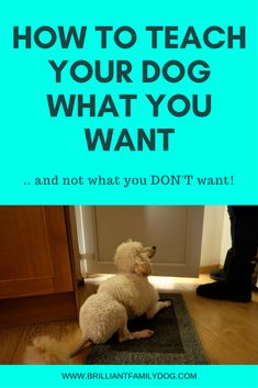 It's so much easier to teach your dog what you want of him, rather than just somehow expect him to know - then telling him off when he's wrong! How unfair would that be if you were told off for breaking rules you didn't know existed?