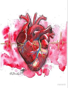 'heart art' by maramk Anatomical Heart Drawing, Human Heart Drawing, Human Anatomy Art, Heart Anatomy Drawing, Tableau Pop Art, Art Watercolor, Skeleton Art, Medical Art, Drawing Tips