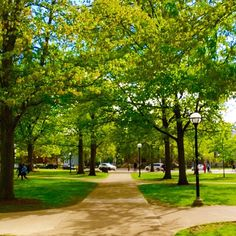 Lush and Green. The diag is magnificent.